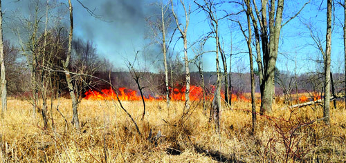 Grass, brush fires lead to burn ban